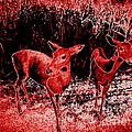 Red Deer by Ed Weidman