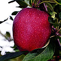 Red Delicious by Kevin Fortier