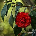Red Elegance by Peggy Hughes