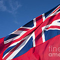 Red Ensign by Anne Gilbert