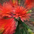 Red Explosion by Heiko Koehrer-Wagner