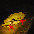 Red-eyed Tree Frog by Bob Phillips
