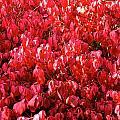 Red Fall by Stephanie  Bland