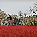 Red Field by Linda Brown