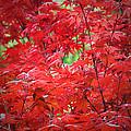 Red  by Lynn Bauer