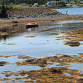 Red Flat At Low Tide by Barbara Griffin