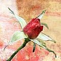 Red Flower 1 by Helene U Taylor