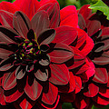Red Flower by Anastasia E