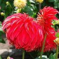 Red Flower by Bradley Bennett