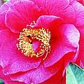 Red Flower by Karl Rose