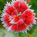 Red Flower Macro by Bruce Nutting
