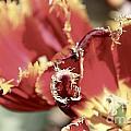 Red Flower by Sean Rathbun