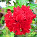 Red Flower by Sergey Lukashin