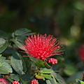 Red Flower Spraying by Jo Jurkiewicz