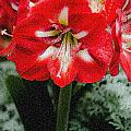 Red Flower With Starburst by Crystal Wightman