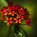 Red Flowers by Bradley R Youngberg