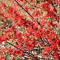 Red Flowers by Julia Gavin