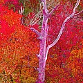 Pink Tree In A  Red Forest by Stacie Siemsen