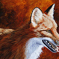 Red Fox - A Warm Day by Crista Forest