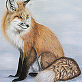 Red Fox by Lena Auxier