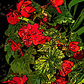 Red Geranium Line Art by Steve Harrington