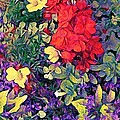 Red Geranium With Yellow And Purple Flowers - Horizontal by Lyn Voytershark