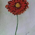 Red Gerbera by Marcia Weller-Wenbert