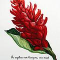 Red Ginger Poem by Karin  Dawn Kelshall- Best