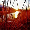 Red Grass by Sarah Pemberton