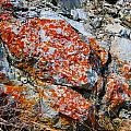 Red Growth Rock by Brent Dolliver