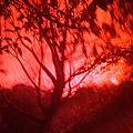 Red Haze by Rakesh Babwah