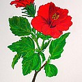Red Hibiscus by Taiche Acrylic Art