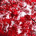 Red I by Tina Baxter