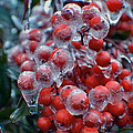 Red Ice Berries by Luv Photography