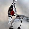Red Ice by Minartesia
