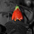 RED by Ivelina Angelova
