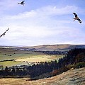 Red Kites At Coombe Hill by Barry BLAKE