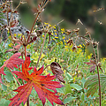 Red Leaf by Cathy Anderson