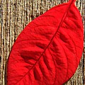 Red Leaf by Chris Berry