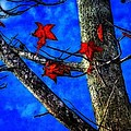 Red Leaves Blue Sky In Autumn by Rebecca Korpita