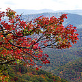 Red Leaves In The Blueridge by Duane McCullough