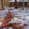 Red Leaves On Snow - Cabin In The Woods by Rebecca Korpita