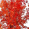 Red Lights by Deborah  Crew-Johnson