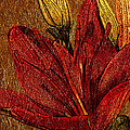 Red Lily Gold Leaf by Phyllis Denton