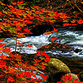 Red Maple Stream  by Randall Branham