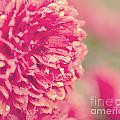 Red Mums by Erin Johnson