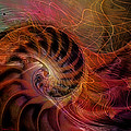 Red Nautilus by Barbara Berney