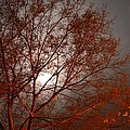 Red Oak At Sunrise by Maria Urso