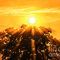 Red Oak Sunrise Fog by Thomas R Fletcher