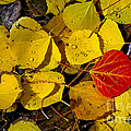 Red On Yellow by Bob Phillips